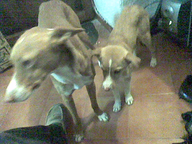 Two lovely dogs need home. Puppy410