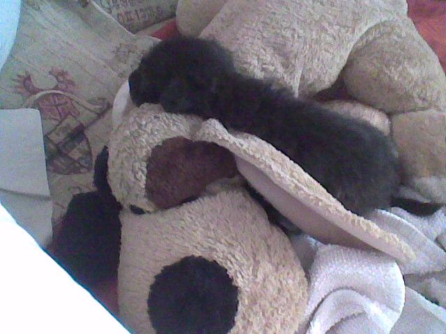 Poochie II Puppym11