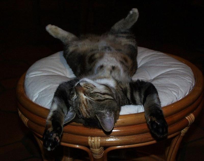 L'art de faire la sieste (par nos amis les chats)  2012_023