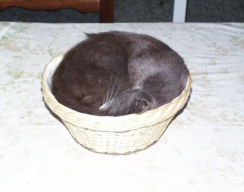 L'art de faire la sieste (par nos amis les chats)  2012_025