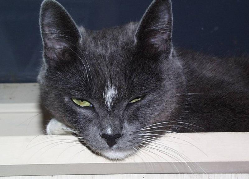 L'art de faire la sieste (par nos amis les chats)  2012_026