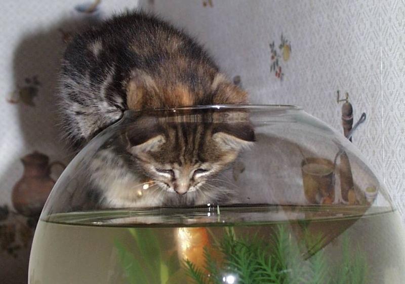 L'art de faire la sieste (par nos amis les chats)  2012_029