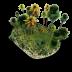 نبات الزينة