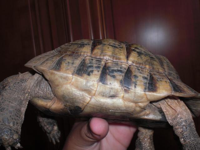Ma tortue Masroud Cimg1230