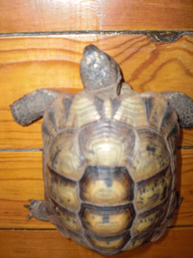 Ma tortue Masroud Cimg1234