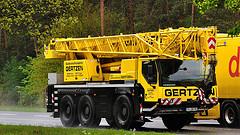 Les grues de GERTZEN (Allemagne). 72787210