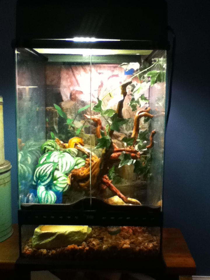 moi j`ai des gecko a crete Img_0510
