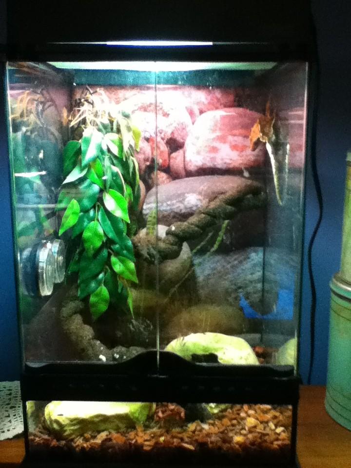 moi j`ai des gecko a crete Img_0511