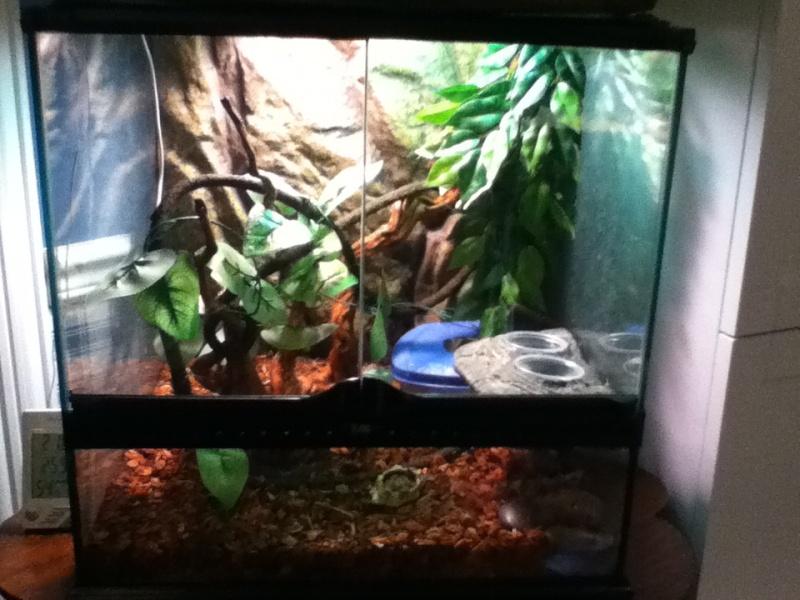 moi j`ai des gecko a crete Img_0512