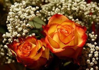 Arti warna pada Bunga Mawar. Orange11