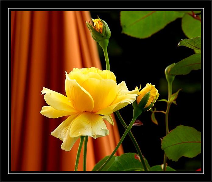 Bégonias  ( et autres fleurs ) Copie_51
