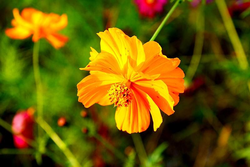 Bégonias  ( et autres fleurs ) Copie_86