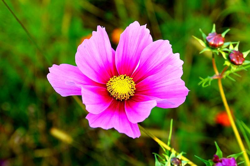Bégonias  ( et autres fleurs ) Copie_87
