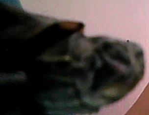 tortue de reeves avec une Affection des paupières Tt10