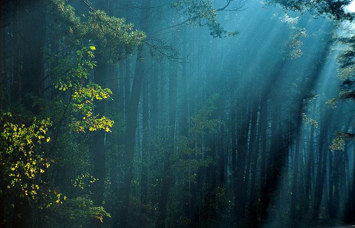 Ellyllon Forest: West Dkd_0210