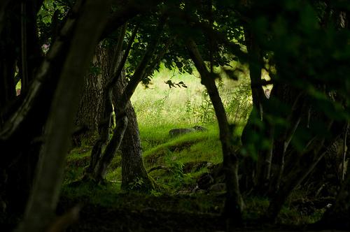 Ellyllon Forest: West Url10