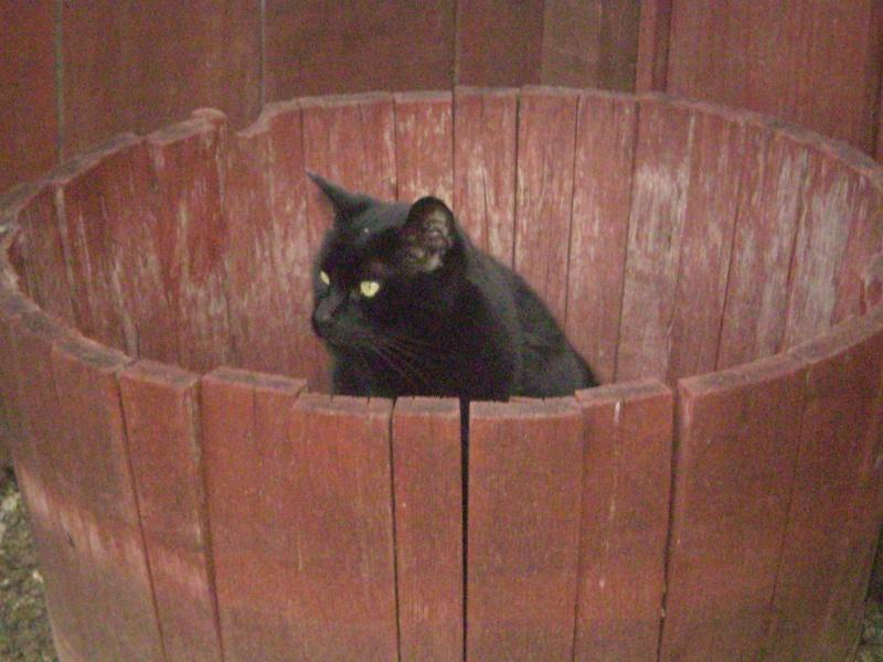Trollin' Bucket Cat L_o_v_10