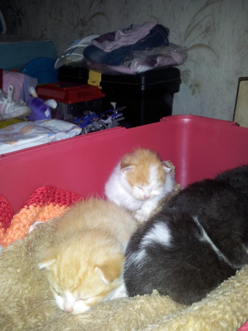 recherche asso pour 5 chatons non sevrés 20120621