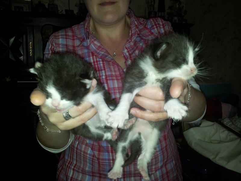 recherche asso pour 5 chatons non sevrés 20120624