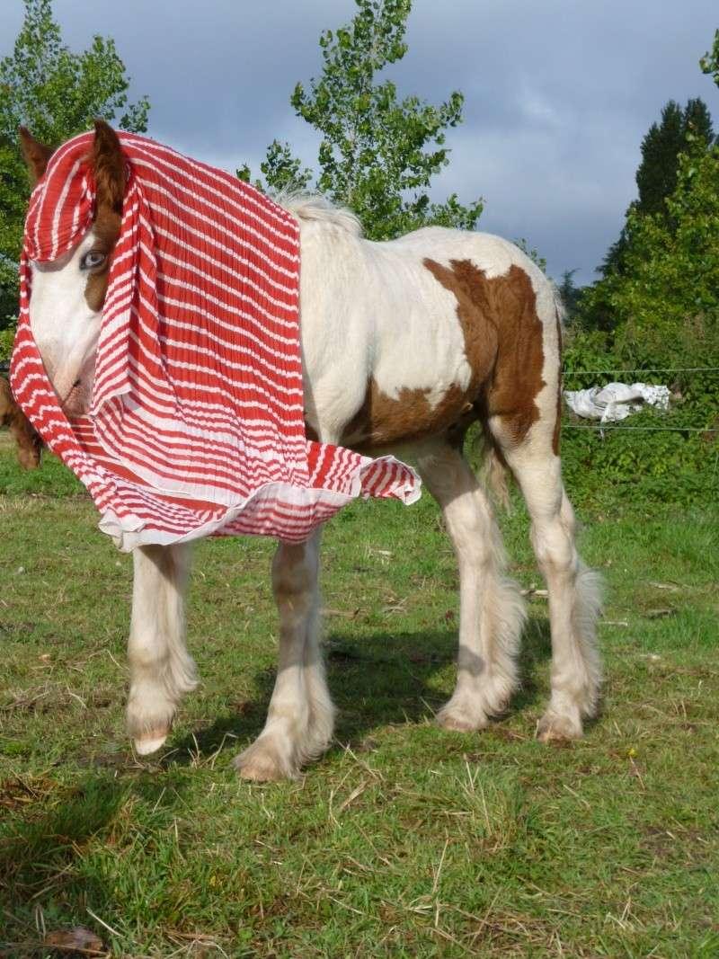 Cartouche et le foulard !! P1010011