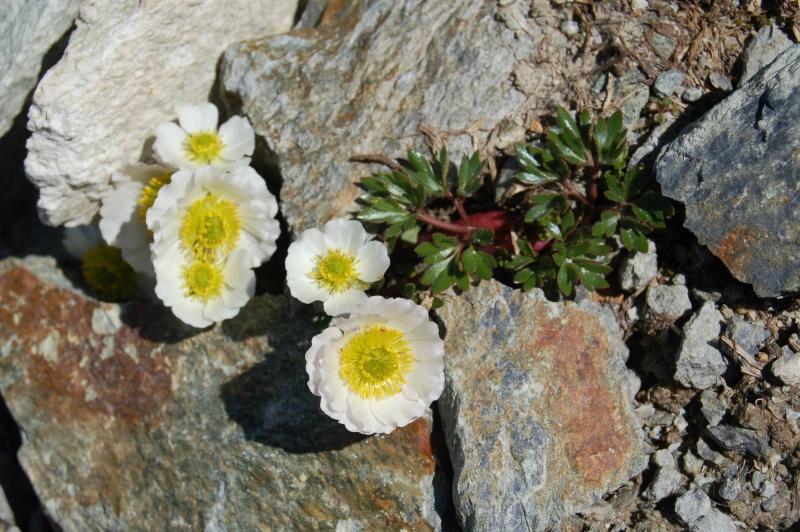 quelques plantes sauvages photographiées dans le Haut Doubs et la Suisse voisine Dsc_1325