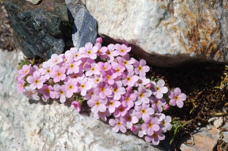 quelques plantes sauvages photographiées dans le Haut Doubs et la Suisse voisine Dsc_1328