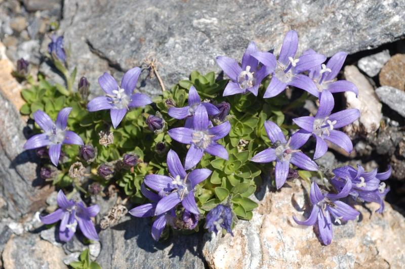 quelques plantes sauvages photographiées dans le Haut Doubs et la Suisse voisine Dsc_1329
