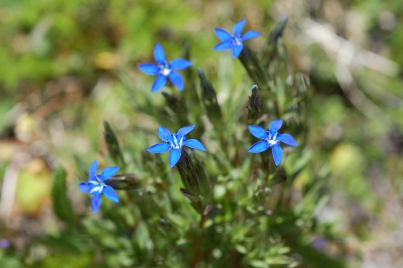 quelques plantes sauvages photographiées dans le Haut Doubs et la Suisse voisine Dsc_1330