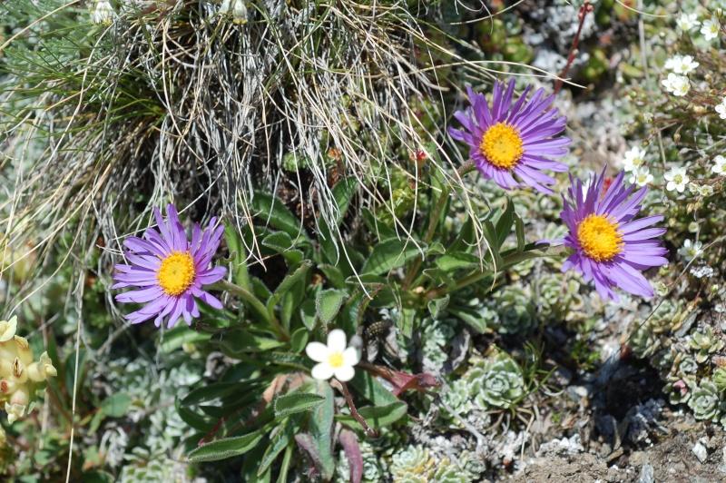 quelques plantes sauvages photographiées dans le Haut Doubs et la Suisse voisine Dsc_1331