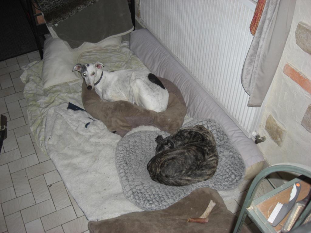 """Les"""" Doggies"""" de La Rive - Page 13 00213"""