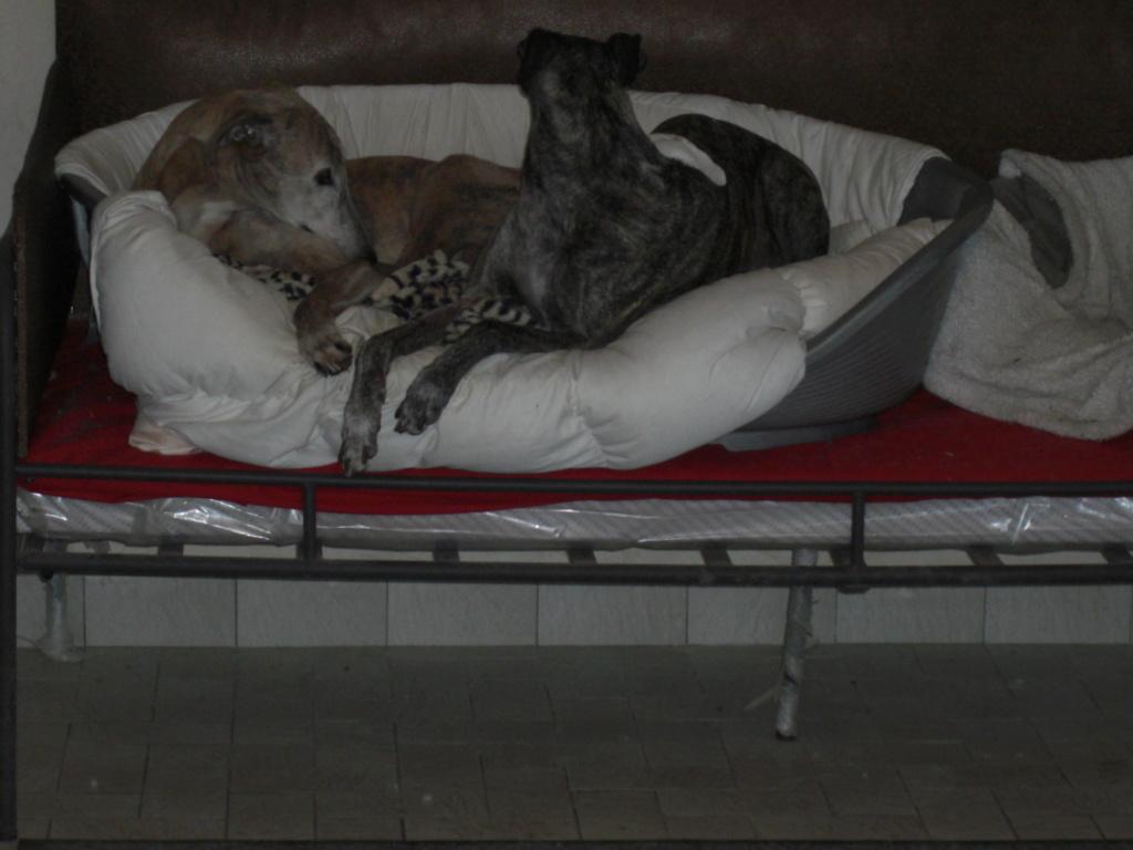 """Les"""" Doggies"""" de La Rive - Page 12 00413"""