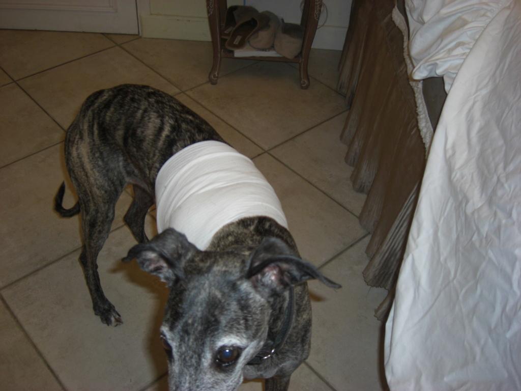 """Les"""" Doggies"""" de La Rive - Page 12 00712"""