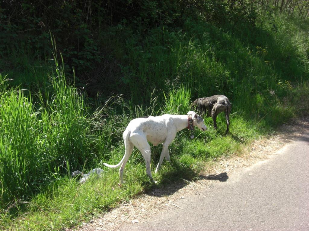 """Les"""" Doggies"""" de La Rive - Page 13 00715"""
