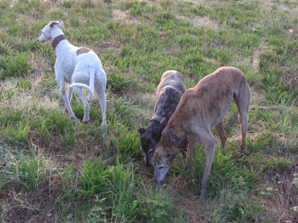 """Les"""" Doggies"""" de La Rive - Page 11 00910"""