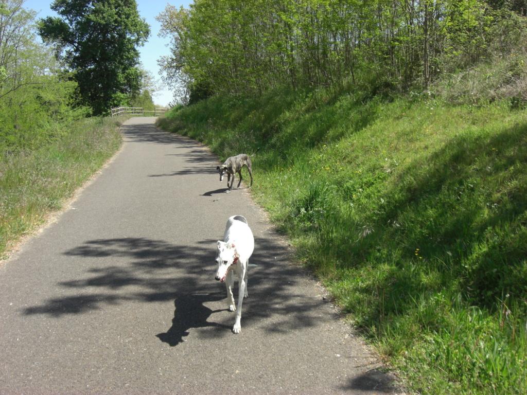 """Les"""" Doggies"""" de La Rive - Page 13 00914"""