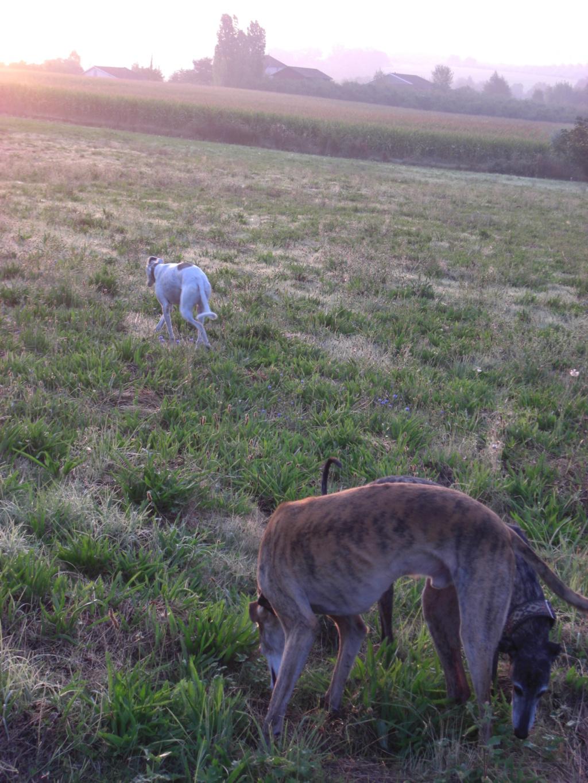 """Les"""" Doggies"""" de La Rive - Page 11 01011"""