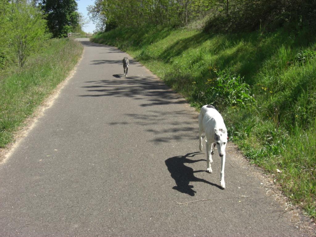 """Les"""" Doggies"""" de La Rive - Page 13 01012"""