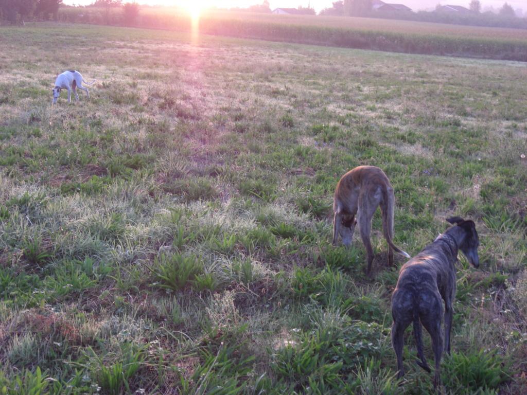 """Les"""" Doggies"""" de La Rive - Page 11 01111"""