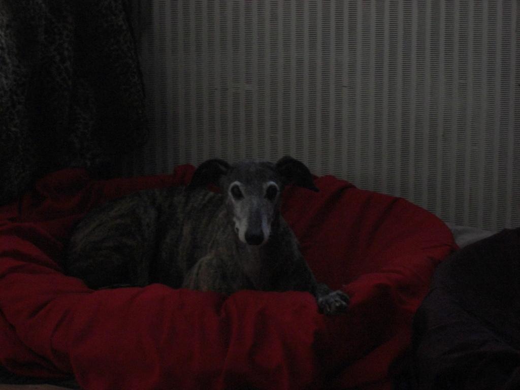 """Les"""" Doggies"""" de La Rive - Page 14 01211"""