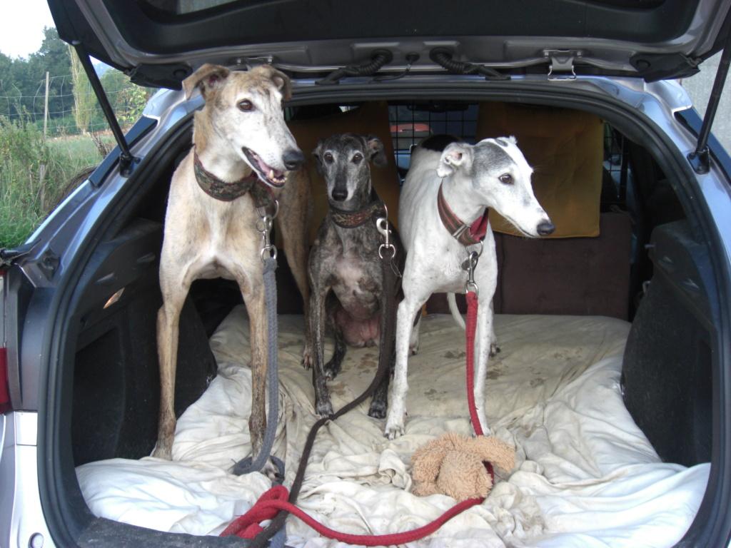 """Les"""" Doggies"""" de La Rive - Page 11 01510"""