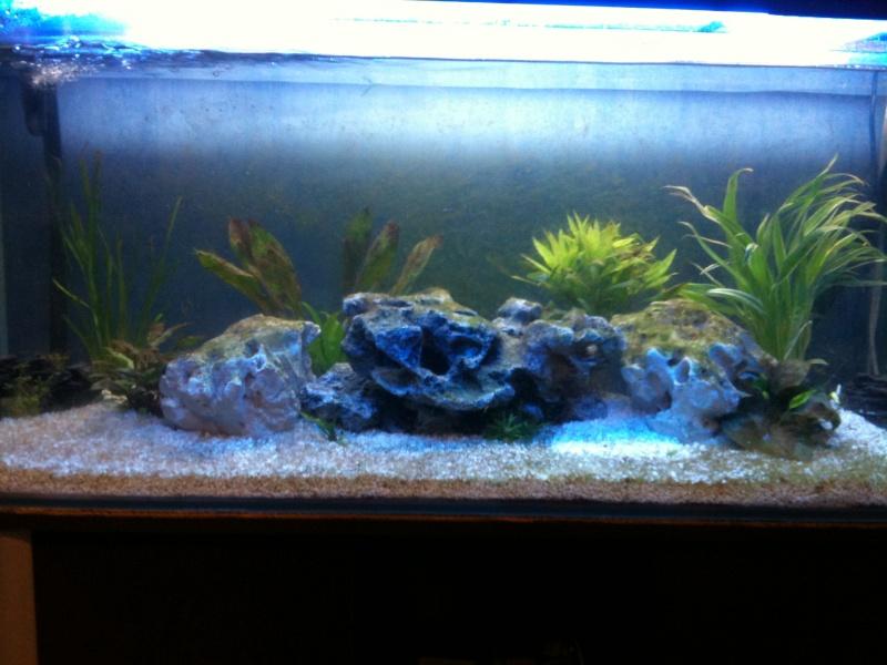 Aquarium 240L quelques questions Img_0511