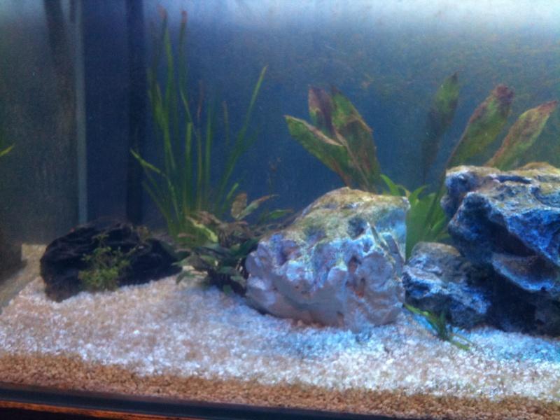 Aquarium 240L quelques questions Img_0512
