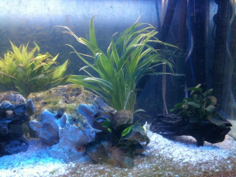Aquarium 240L quelques questions Img_0513