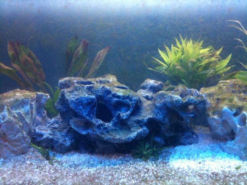 Aquarium 240L quelques questions Img_0514
