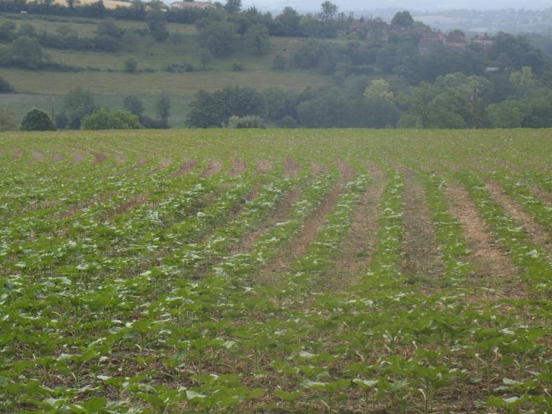 semis de maïs - Page 8 Gedc0511
