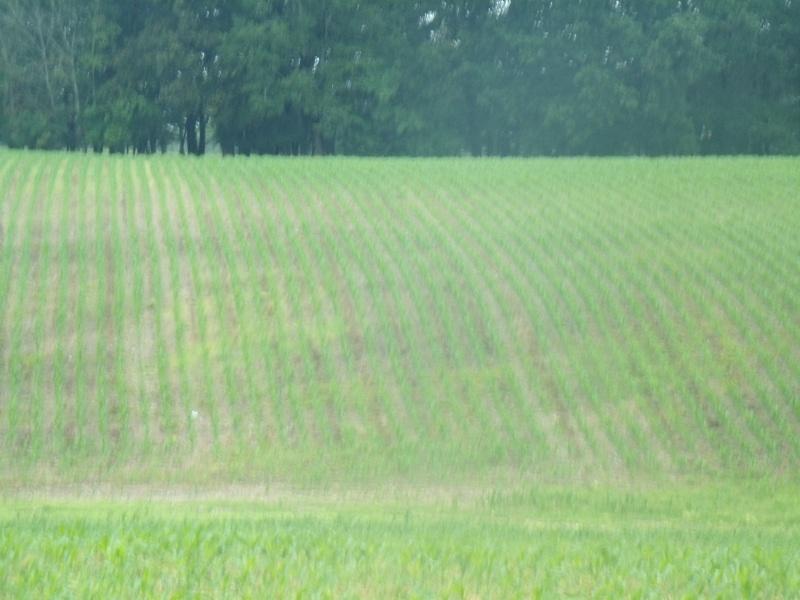 semis de maïs - Page 8 Gedc0612