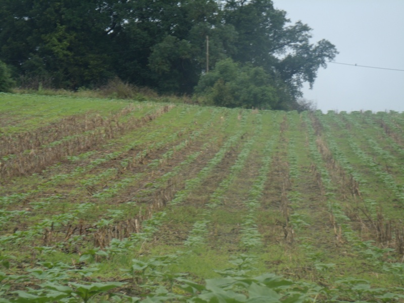 semis de maïs - Page 8 Gedc0613