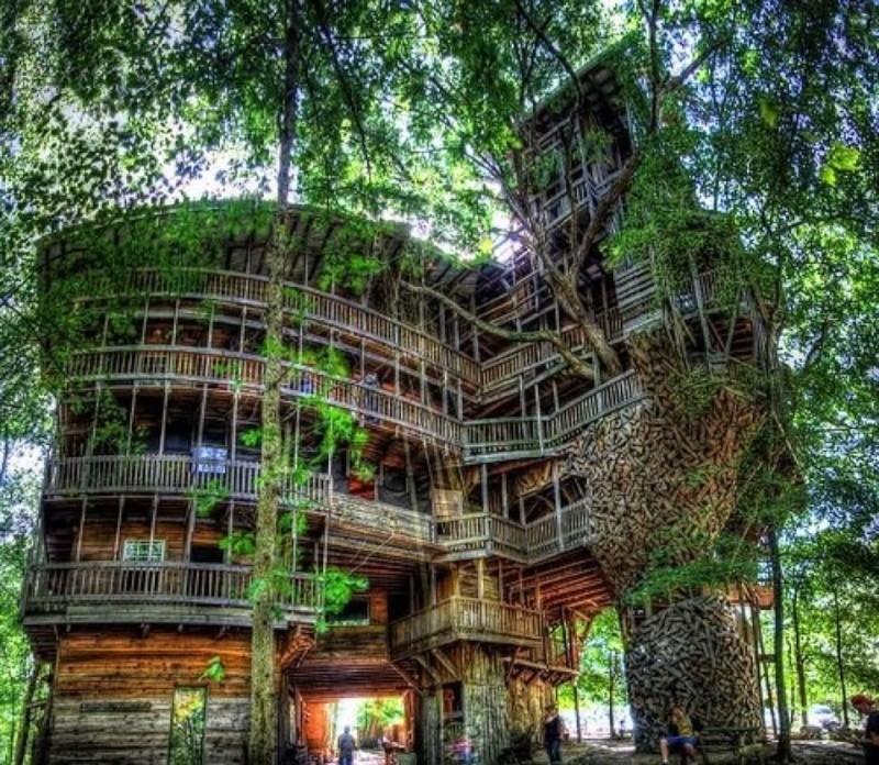 """""""une cabane"""" d'une superficie d'environ 1.000 m2 dans un arbre (du chêne blanc) sur 10 étages 53654810"""