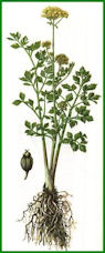 Herbiers Ache10