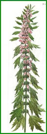 Herbiers Agripa10
